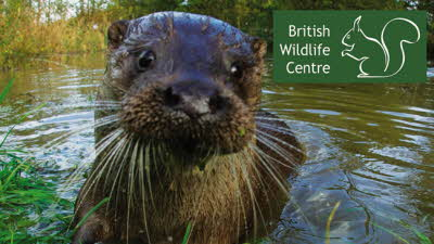 Offer image for: British Wildlife Centre - Two for the price of one.