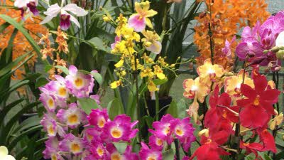 Offer image for: Burnham Nurseries & Orchid Paradise - 10% off food and drink in Cafe Vanilla.