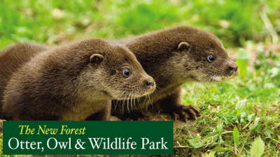 Offer image for: New Forest Wildlife Park - 10% discount - Pre-booking required.