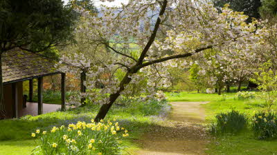 Offer image for: Batsford Arboretum & Garden Centre - 10% discount off entry.