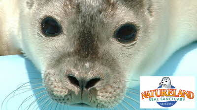 Offer image for: Skegness Natureland Seal Sanctuary - 10% discount off full price admission.