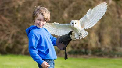 Offer image for: The Secret Owl Garden - 10% off flying experiences for two or more adults - Pre-booking required code CAMC20