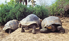 Enchanted Islands of Galápagos and Ecuador Tour